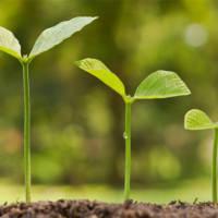 Декрет Президента № 7 «О развитии предпринимательства»